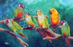 Colorful Conures