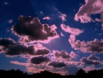 Pink Clouds Cat Forsley Designs