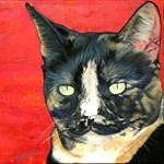 Calico Kitty
