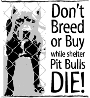 Pit Bull Don't Breed or Buy