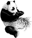 Panda Chimera