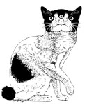Kitty3eyed
