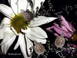 Terrapins & Flowers