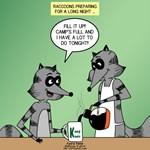 Raccoon Tent Foraging