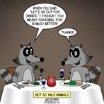 Raccoon Dining