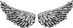 Wide Dark Wings