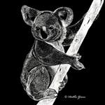 Midnight Koala
