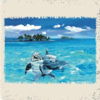 Dolphin Party For Kids