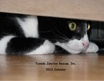Cat Calendars - Rescue Cat - Tuxedo Cat