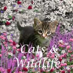Cats & Wildlife