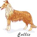 Collie T-shirt, Collie T-shirts