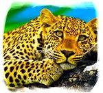 Jaguar's watch