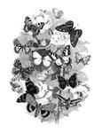 Vintage Butterflies Print