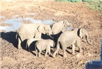 wild and farm animals