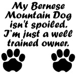 Well Trained Bernese Mountain Dog Owner