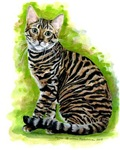 Toyger Products