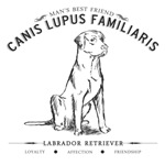 Vintage Labrador