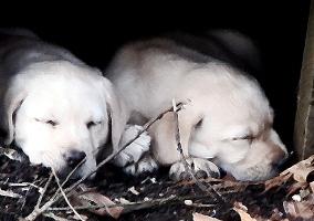 Shih Tzu Gifts, German Shepherd Lover, Labrador Re