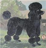 Winning Poodle