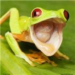 Laughing red-eyed treefrog