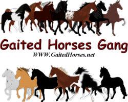 Gaited Horses Gang
