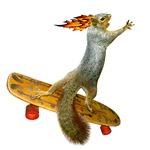 Skateboarding Squirrel