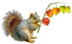 Squirrel Orange Lanterns