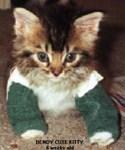 Bendy Kitty