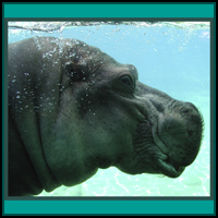 HIPPO T-SHIRTS & GIFTS
