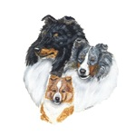 Shetland Sheepdog Three Colors