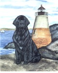 Newfoundland Lighthouse Dog - Black