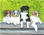 Austrailian Shepherd Puppy Line