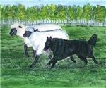Belgian Sheepdog Herding