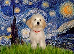 STARRY NIGHT<br>& Havanese