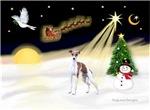 NIGHT FLIGHT<br>& Italian Greyhound
