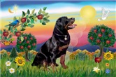 BRIGHT COUNTRY<br>& Rottweiler #6