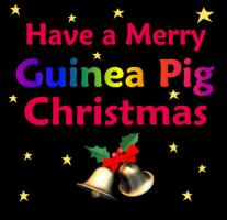 GUINEA PIG<br>Christmas Designs