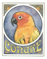 For Conure Lovers