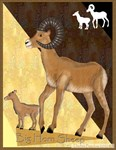 Big Horn Sheep and baby