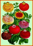 Chinese Lantern Vintage Flower Print