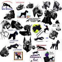 TONS of my Giant Schnauzers