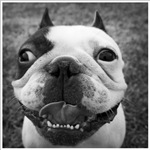 Happy Louie by Stevenholmesphotography.com