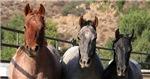 Horse Clutch Bags