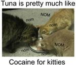 Tuna is like cocaine for kitties