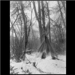 Forest Tipi
