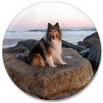 Collie on the Rocks