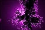 Tall Grass Purple