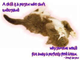 Give Away Kitten