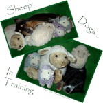 Sheep Dogs in Training