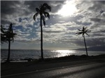 Palm Tree Evening
